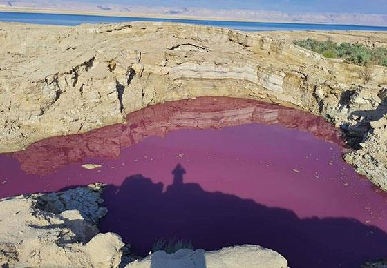 ضجة في الأردن.. بركة حمراء غريبة بجانب البحر الميت! صورة رقم 4